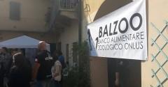 Balzoo 2