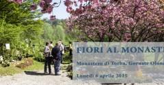 fiori torba monastero