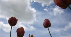 primavera nuvole sole