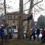 Tree climbing 11