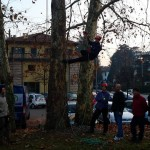 Tree climbing 12