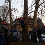 Tree climbing 13