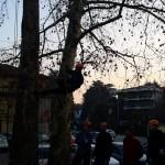 Tree climbing 6