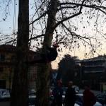 Tree climbing 7