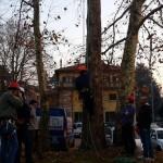 Tree climbing 9