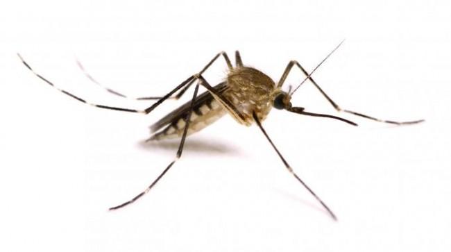 le-zanzare