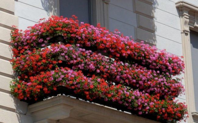 Ufficio Del Verde Varese : Rescaldina in festa con u201cbalconi fioritiu201d varese polis